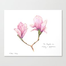 The Magnolia was dripping in gorgeousness Canvas Print