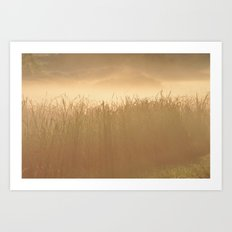 Field Grass in the Mist  2 Art Print
