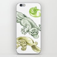 platypus iPhone & iPod Skins featuring Platypus by Mayra Boyle