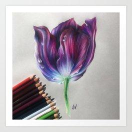 """Tulip"" Drawing Art Print"
