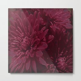 Burgundy Chrysanthemums Metal Print