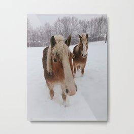 Horse Pair Metal Print