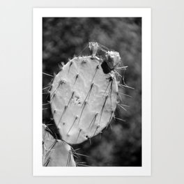 Prickly Pear Cactus-Black and White Art Print