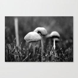 Mushrooms Canvas Print