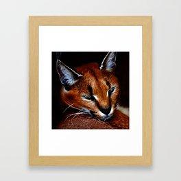 Karakul wildcat Framed Art Print