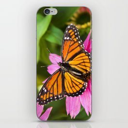 Orange Viceroy Butterfly iPhone Skin