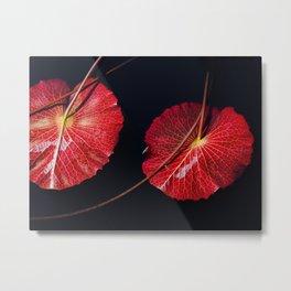 Nymphaea Scarlet Flame Lily Pad Leaves Metal Print
