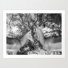 Gazelle (Black and White) Art Print