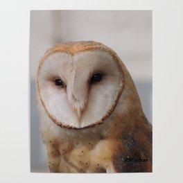 Barn Owl on Alert Poster