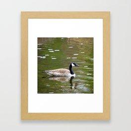 Canada Goose Framed Art Print