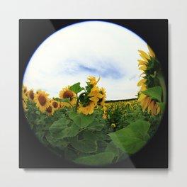 Sunflower 15 Metal Print