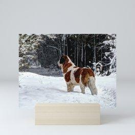 St Bernard in the snow Mini Art Print