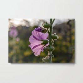 Pirple flower on sunset Metal Print