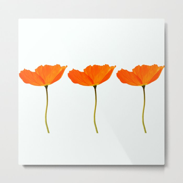 Three Orange Poppy Flowers White Background #decor #society6 #buyart Metal Print