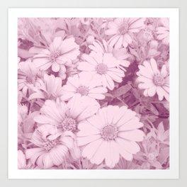 Elegant blush pink white daises botanical floral Art Print