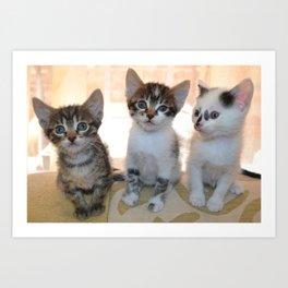 Funny kittens Art Print
