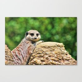 Favourite Rock Canvas Print