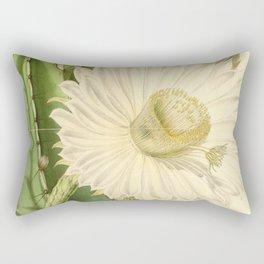 Strophocactus testudo Rectangular Pillow