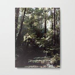 INTO THE WILD VIII / Big Basin, California Metal Print