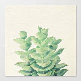 Necklace Vine Canvas Print