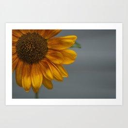 Sunflower in Yellow Art Print
