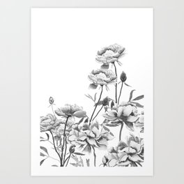 black and white peonies Art Print