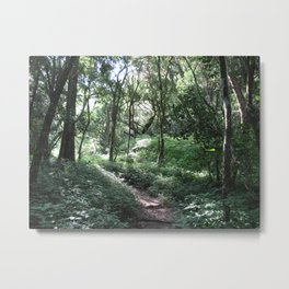 Forest Walks 3 Metal Print