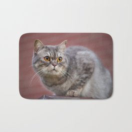 British shorthair cat on the wall Bath Mat