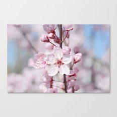 Pretty Pink Canvas Print