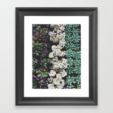 Succulent (4) Framed Art Print