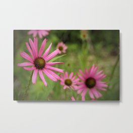Tennessee Coneflower Metal Print