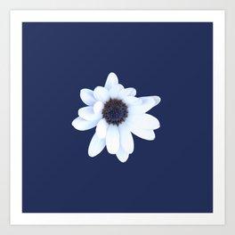 Sleepy African Daisy Flower Art Print