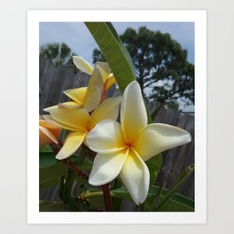 Florida Blooms Art Print