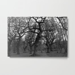 Oak Trees on the March Metal Print