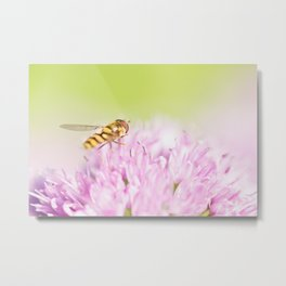 Hoverfly on Allium - Onion Flower 5 Metal Print