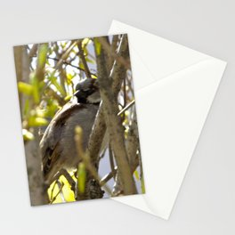 nesting in newport Stationery Cards