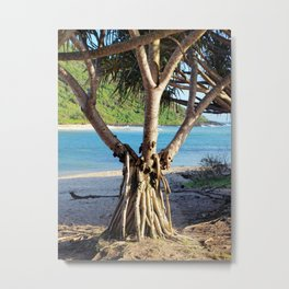 Looking through the Pandanus Metal Print