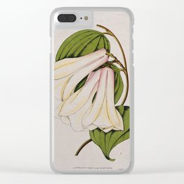 A Chilean bellflower (Lapageria rosea)  flowering stem. Coloured lithograph, c. 1855. Clear iPhone Case