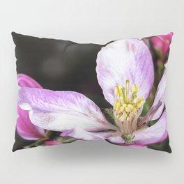 Close up of a Crab apple blossom Pillow Sham