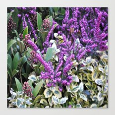 nature lilac ####### Canvas Print