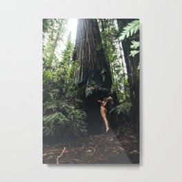 Redwoods Love Metal Print