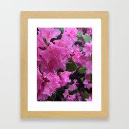 The Pinkest Flowers Framed Art Print
