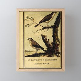 fauvette a tete noire (Fr) bec figue (Fr)6 Framed Mini Art Print