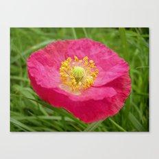 pink poppy XI Canvas Print