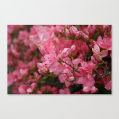 Flowering crabapples in the Rain Canvas Print