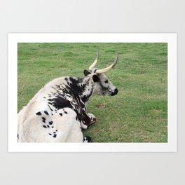 Gazing Longhorn Art Print