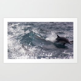 Wake Riding Common Dolphins Art Print