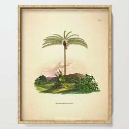Vintage Botanical illustration, 1916 (Palm) Serving Tray