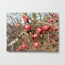 Planting young tree seedlings in autumn in the garden Metal Print