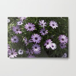 lila flower Metal Print